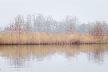 Stilte van Mireille Breen