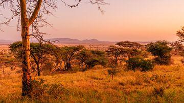 Zonsondergang in de Serengeti van René Holtslag