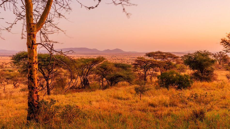 Zonsondergang in de Serengeti