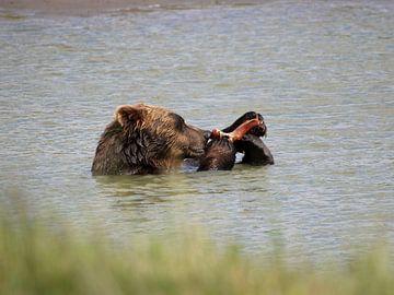 Grizzlybeer - Alaska  van
