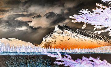 Rundlauf durch Bäume von Graham Forrester