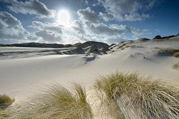 Helmgras in de duinen van Martin Jansen