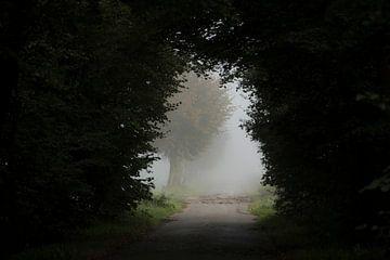 Een opening in het bos