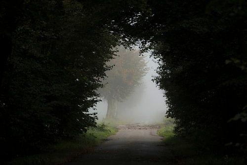 Een opening in het bos van