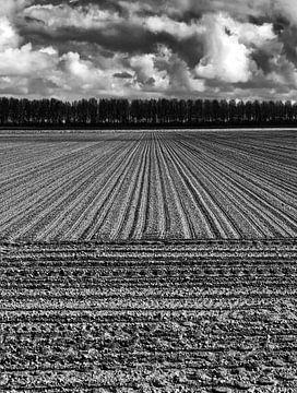 Gepflügtes Feld von Kenneth Stamp