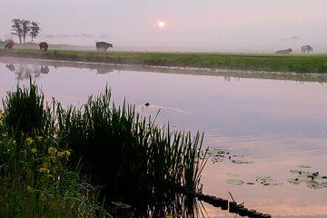 Koeien in de mist langs de Haarlemmertrekvaart. van Menno van Duijn