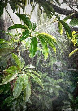 Tropisch regenwoud van Egon Zitter