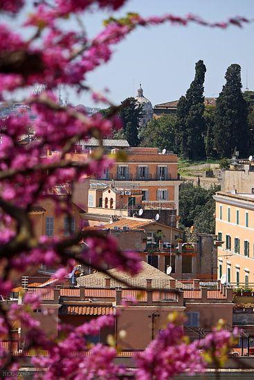 Rome ... eternal city XV