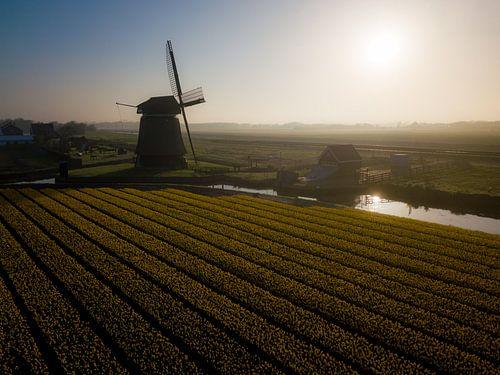 Goedemorgen vanuit Noord-Holland von K.C. Statia