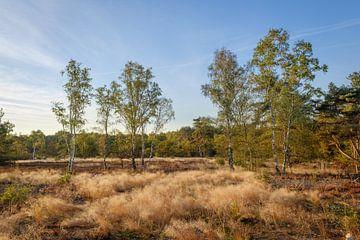 Birkenbäume von Johan Vanbockryck