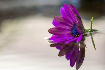 Blume auf dem Wasser von Markus Weber