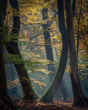 Dansende bomen van Hans Brasz
