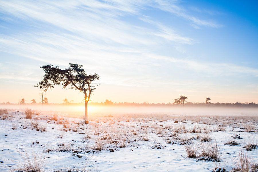 Schneelandschaft von Thomas van der Willik