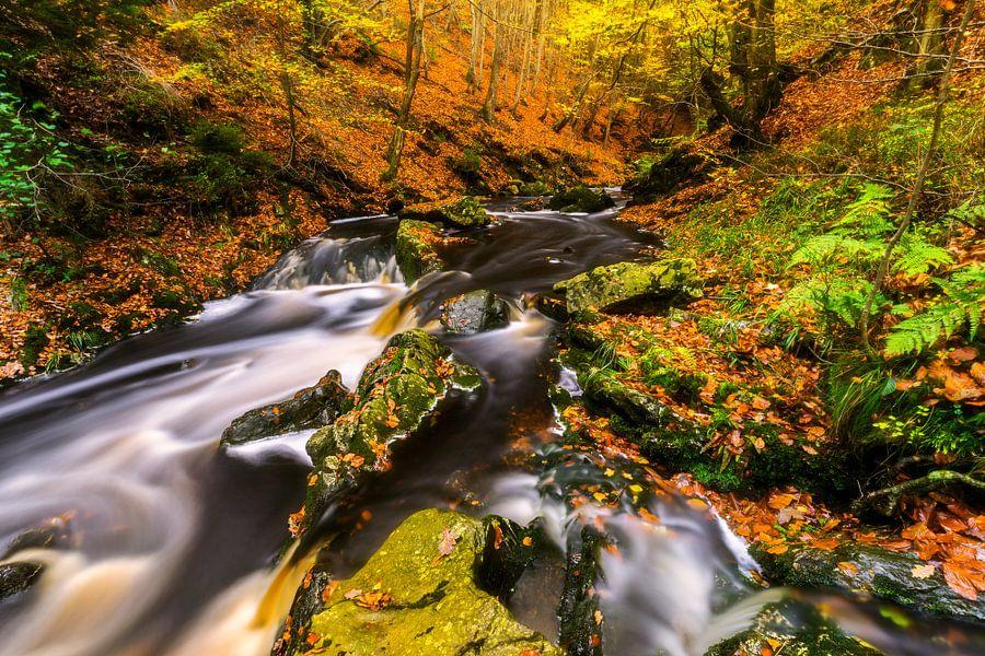 Herfst beek met groene rotsblokken