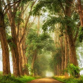 Acacia's the Mist van Lars van de Goor