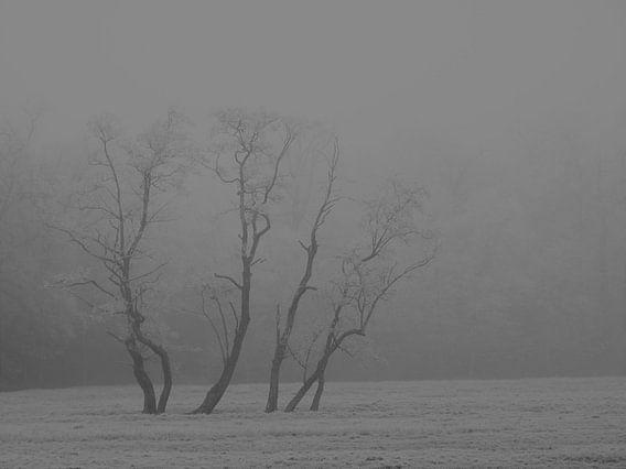 9. Winterlandschap bomen