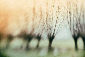 Knotwilgen in het ochtendlicht van Ellen Driesse