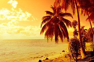 Tropischer Sonnenuntergang mit Strand- und Palmen