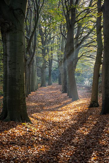 Stralende Herfst