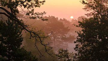 Goedemorgen Zon van Epic Photography