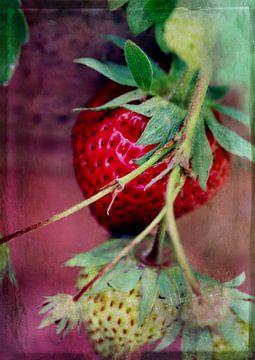 Erdbeeren van Rosi Lorz