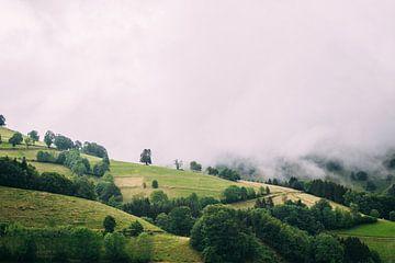 Schwarzwald sur Patrycja Polechonska
