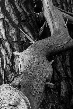 Alter Stumpf von Patrick Rosenthal