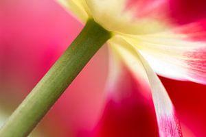 Tulp zaken van Ramon Bovenlander