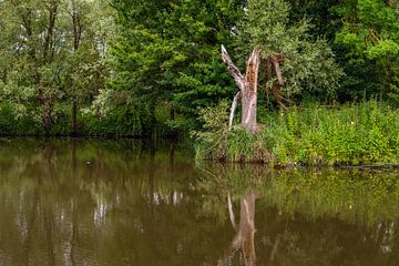 Arbre brisé sur le bord de l'eau sur Ruud Morijn