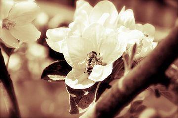 De bloem en de bij van Elly Michiels-Fleuren