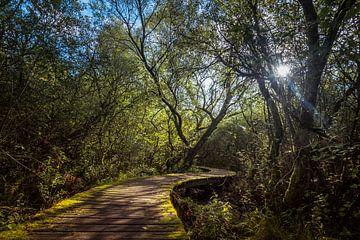 Twisting Trail van Marco de Graaff