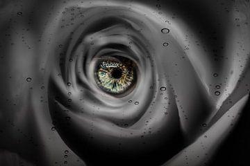Auge der Rose von Helga van de Kar