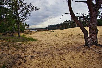 Herbstspaziergang durch den Sand von Joran Quinten