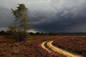 Heide bij een onweersbui