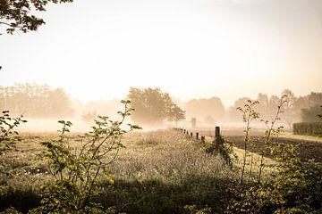 Ochtendnevel boven de landerijen van Landgoed Amelisweerd van Arthur Puls Photography