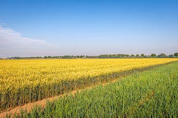 Niederländische Landschaft in blau, gelb und grün von Ruud Morijn