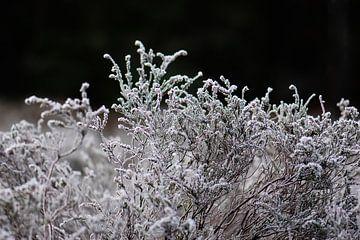lande gelée sur Tania Perneel