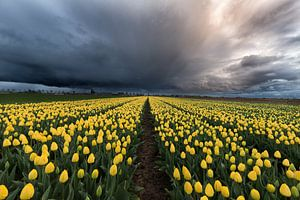 Tussen de Tulpen en de storm