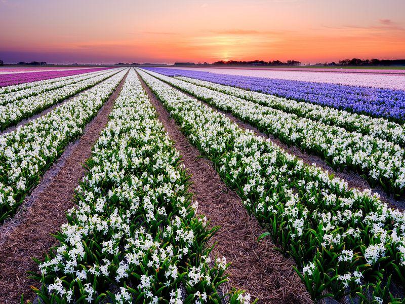 kleurrijk bloembollenveld tijdens de lente van eric van der eijk