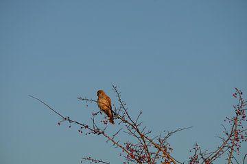 Roofvogel van Myrte Wilms