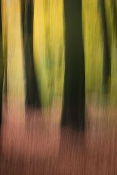Vaag bos van Francois Debets