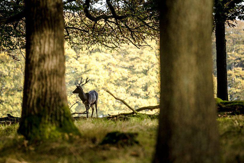 3 trees and a deer van Ramon Bovenlander