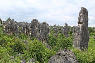 Stenen Woud Kunming China van Martin van den Berg Mandy Steehouwer