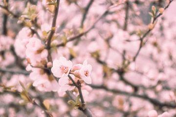 The pink blossom 2 van Elianne van Turennout