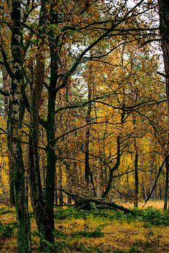 Into the woods von Monique Pulles