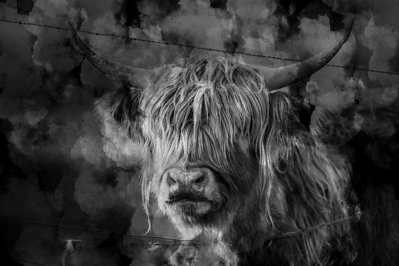 Schotse hooglander zwart wit kunst van Steven Dijkshoorn
