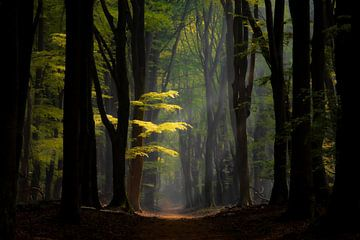 In to the woods van Frank Verburg