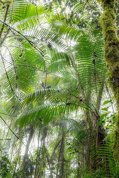 Palmen im Nebelwald, Ecuador von Hanneke Bantje