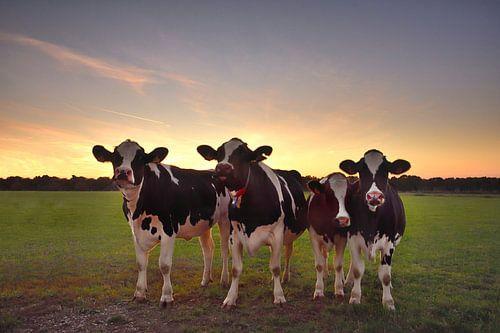 Nieuwsgierige koeien von John Leeninga