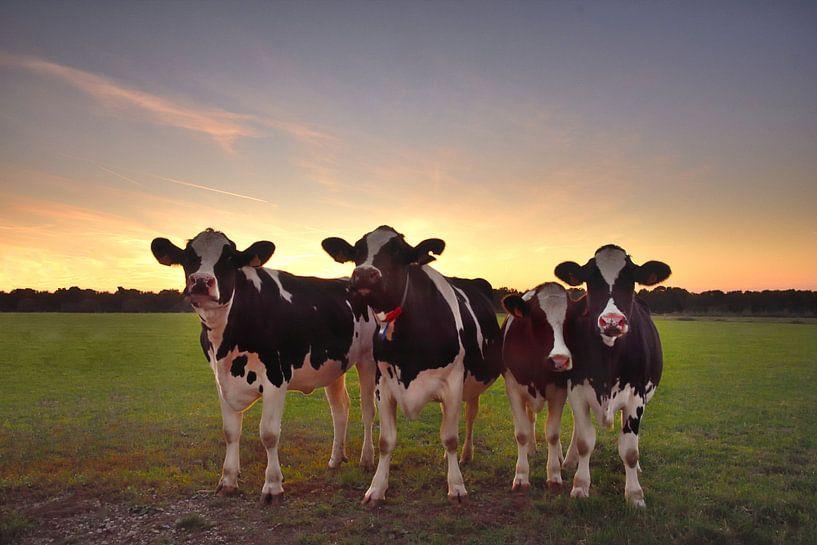 Nieuwsgierige koeien van John Leeninga